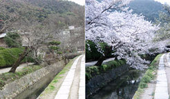Tetsugaku no michi (The Path of Philosophy) in Kyoto, Japan, a favorite place to watch cherry blossoms.