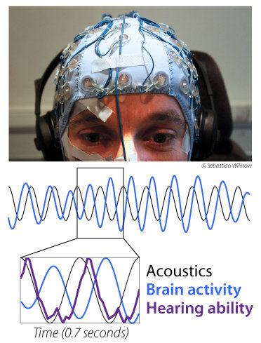 "Listeners' brain rhythms synchronize with the acoustic stimulus, which causes hearing abilities to ""oscillate""."