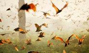 Verhaltensforscher wollen das Wanderverhalten von Tieren mithilfe von GPS-Sendern aus dem All verfolgen