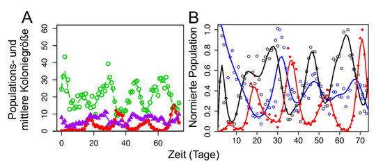 <p><strong>Abb. 3:</strong> A) Öko-evolutionäre Dynamiken in Rädertier-Algen-Systemen (Räuber-Beute-Systemen), wenn das System mit innerartlicher Vari