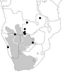 Historically know distribution of Khoisan (grey area) and divergent Khoisan mitochondrial DNA lineages (black dots).