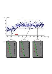 <strong>Abb. 1:</strong> Die funktionelle Änderung der Synapsenstärke bewirkt strukturelle Änderungen an dendritischen Dornen. (a) Der Zeitverlauf der