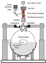 <strong>Abb. 3:</strong> Versuchsaufbau zur Untersuchung von Mäusen in virtueller Umgebung. Eine Maus wird auf eine auf einem Luftstrom gelagerte Styr