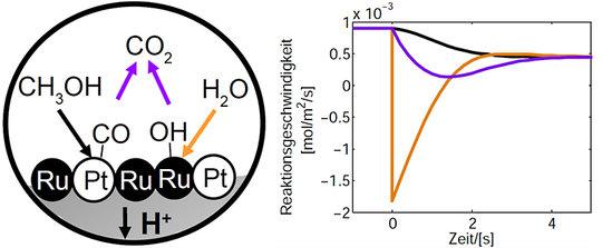 <strong>Abb. 2:</strong> Postulierte Reaktionsschritte für die Methanol-Oxidation (links) und modelliertes dynamisches Verhalten der einzelnen Reaktio