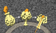 Microbes use a channel protein as a syringe for toxins.