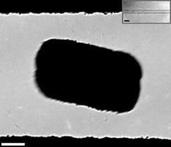 Transmissionselektronenmikroskopische Aufnahme eines beweglich aufgehängen Objekts. Eine allein durch die thermische Energie angeregte Torsionsschwing