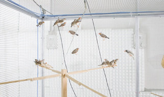 Manfred Gahr and his team at the Max Planck Institute for Ornithology in Seewiesen want to find out what goes on in the heads of zebra finches when the males and females engage in a tête-à-tête.