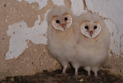 As they get older, baby owls change their sleeping patterns. The older they get, the less time they spent in REM sleep.