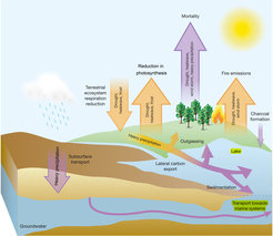The many and varied consequences of extreme weather: droughts, heat waves, storms, heavy rain and extreme frost affect the carbon balance of forests, grasslands and agricultural land in different ways. The arrows pointing upward represent additional carbon dioxide in the atmosphere. The arrows pointing downward indicate that carbon dioxide is removed more slowly from the atmosphere. Orange arrows stand for short-term and purple arrows for long-term effects.