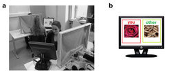 Participants in an experiment (a): while the participants were exposed do either pleasant or unpleasant visual and tactile stimuli (b), they were asked to evaluate the emotions of their partners.