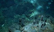 Die Tiefen der Ozeane sind ein lebensfeindlicher Ort. Um den widrigen  Bedingungen zu trotzen, haben sich viele Organismen zu  Lebensgemeinschaften zu