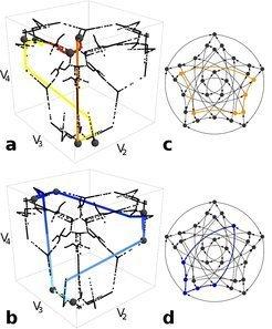 <strong>Abb. 4:</strong> Bio-inspiriert viel Rechnen mit wenig Aufwand: Schalten im Netzwerk der Möglichkeiten löst komplexe Rechenaufgaben.