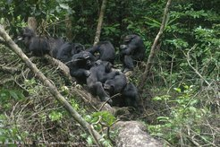 Chimpanzees have differentiated relationships. With some group members they form close social bonds, with others they do not. They do, however, always keep track of others' bonding partners.