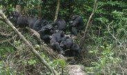 Chimpanzees keep track of other group members' bonding partners and use this knowledge in conflict situations