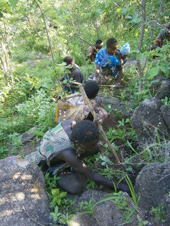 Hadza digging for plant foods.
