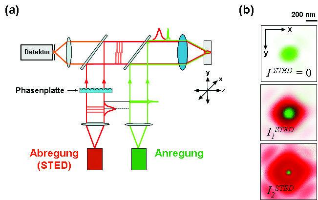 STED-Mikroskopie: (a)  Typisches Schema eines STED-Mikroskops mit Anregungs- und Abregungsstrahl, Phasenplatte, Detektor und Objektiv. In der Fokalebe