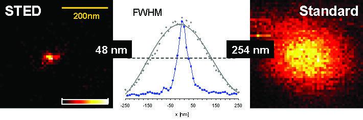 Gemessene Fluoreszenzspots: Beugungsbedingte Standardgröße (rechts) und 5-mal feiner mit dem STED-Verfahren (links). Die drastische Verringerung des S
