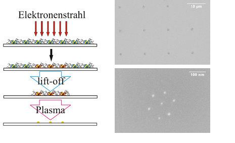 """Links: Schematische Darstellung einer Mikro-Nano-Strukturierung: mit Elektronen bestrahlte Mizellbereiche bleiben nach dem """"lift-off""""-Verfahren auf de"""