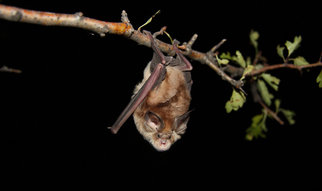 Despite the fact that bats are active after sunset, they rely on the sun as their most trusted source of navigation.