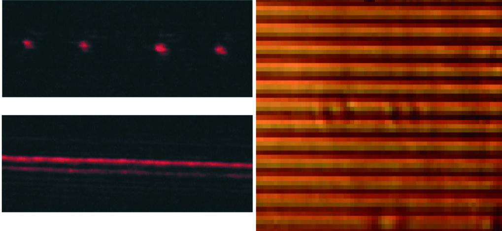 Laser-induziertes Muster in konzentrierter, homogener Polyisopren-Lösung. Die Verwendung eines optischen Gitters zur Belichtung der Probe führt zur Au