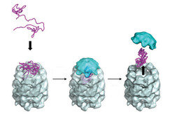 <b>Fig. 3 | Action of the chaperonin protein.</b>