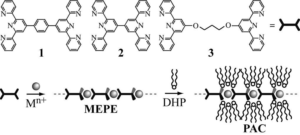 Aufbau der MEPE und PAC. Lineare Liganden auf der Basis von Terpyridinen, wie die Moleküle 1, 2, und 3, bilden mittels Metallionen-Koordination in Lös