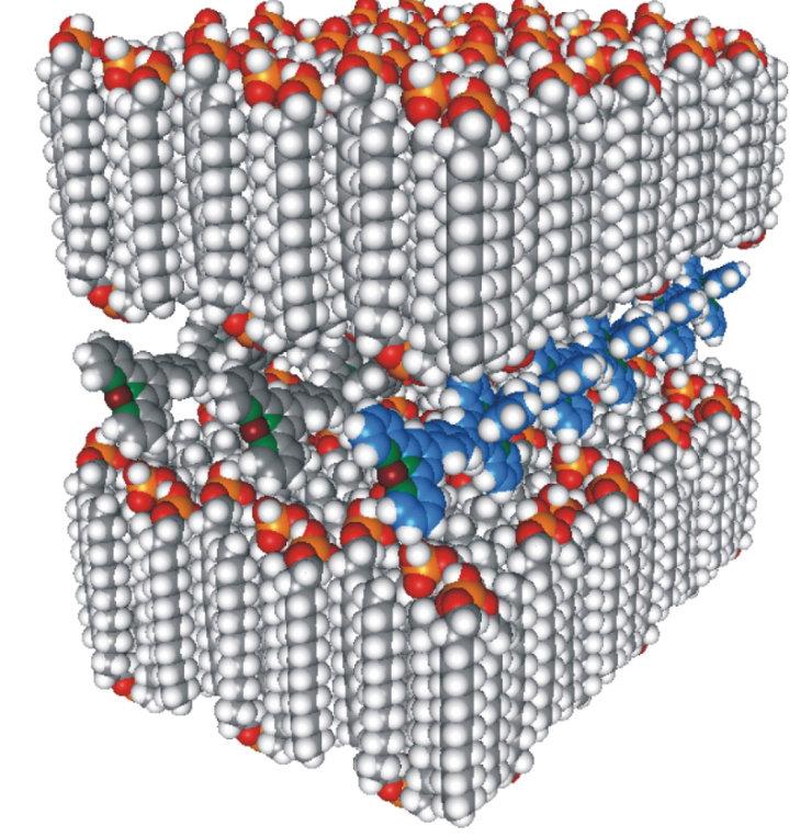 Die PAC-Struktur besteht aus einzelnen Lagen interdigitierter Amphiphile sowie den MEPE-Strängen, die Zwischenschichten ausfüllen.