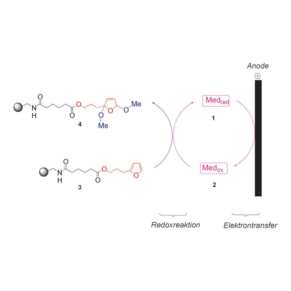 Darstellung der elektrochemischen Oxidation von Furanen in der Organischen Festphasensynthese. Der Redoxmediator 1 (Bromid-Ionen) wird an der Anode ox