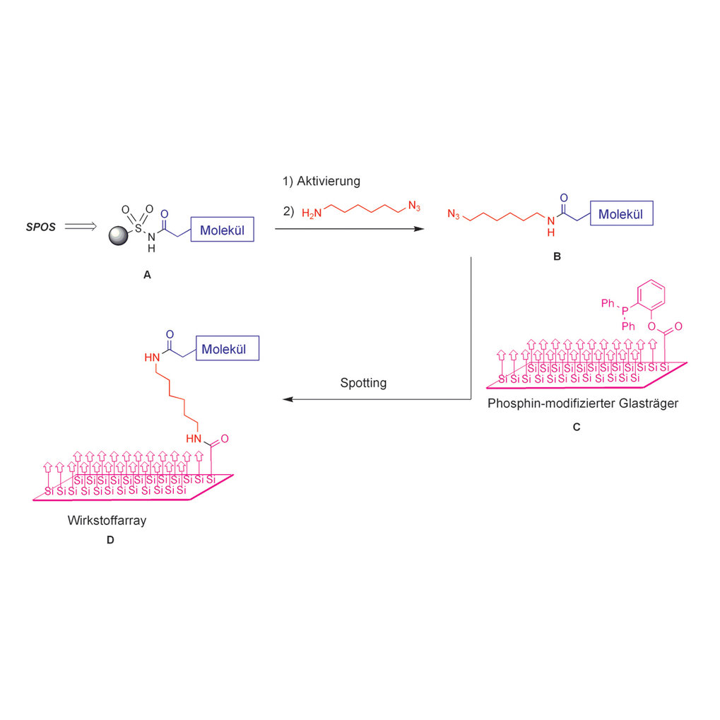 Herstellung von Wirkstoffarrays durch eine Kombination von Organischer Festphasensynthese (SPOS) und Staudinger-Ligation. Die durch SPOS erhaltenen po