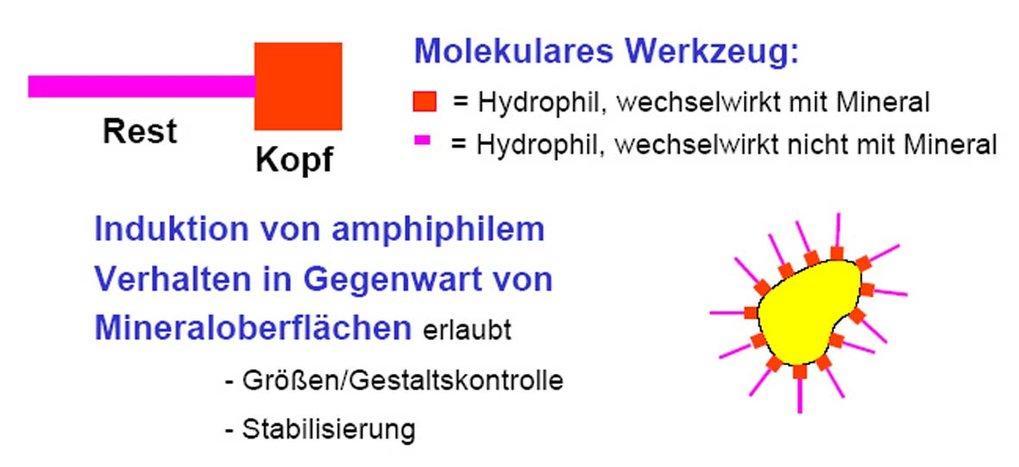 Konzept der Funktionsweise von doppelthydrophilen Blockcopolymeren (DHBC). Ein mineralisches Nanopartikel ist gelb gezeichnet.