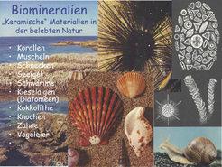 Beispiele für Biomineralien.