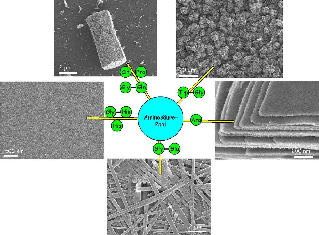Steuerung der Morphologie der Abscheidungsprodukte während der Mineralisation in wässriger Zinksalzlösung durch die Anwesenheit der Aminosäuren Citrul