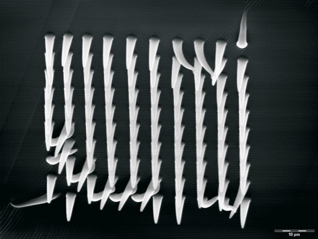 Aus Silikon geformtes Feld von 1 µm dicken Fasern als Imitation biologischer Haftstrukturen.
