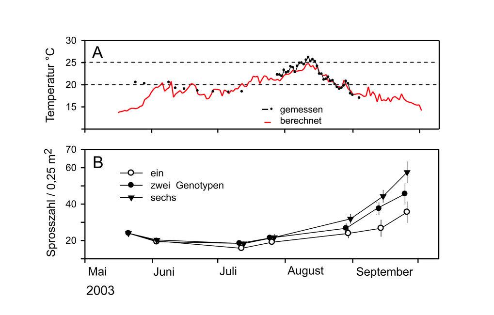 Zeitlicher Verlauf der Wassertemperaturen am Experimentalstandort Maasholm (A) sowie die Entwicklung der mittleren Sprosszahlen (± ein Standardfehler)
