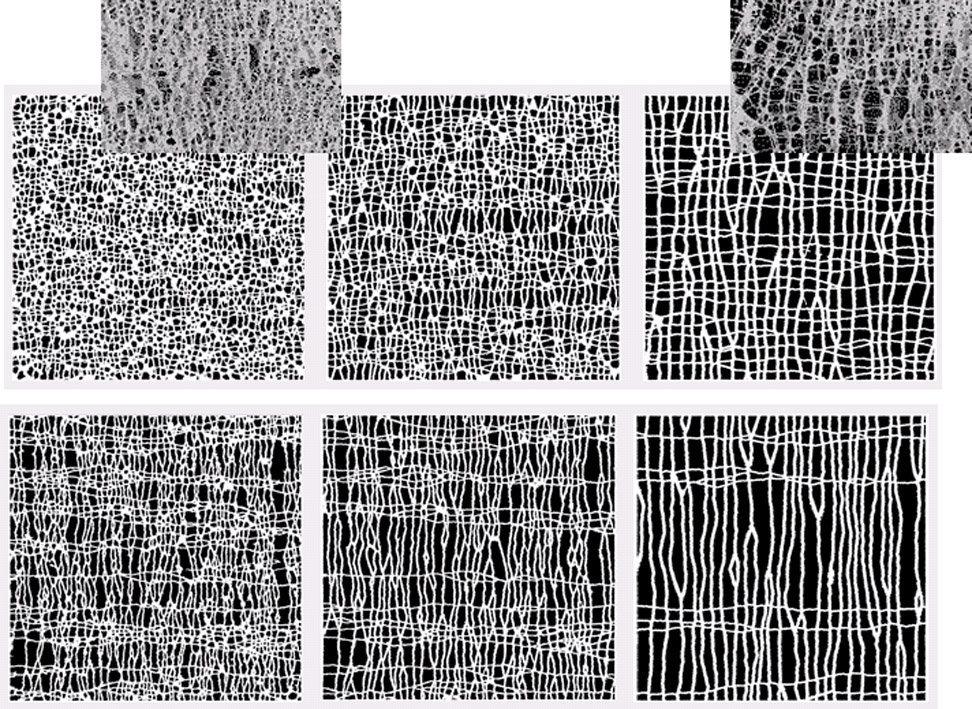 Zeitentwicklung des zweidimensionalen Modellsystems zu drei unterschiedlichen Zeiten von jung (links) zu alt (rechts). Knochen ist weiß, Knochenmark s