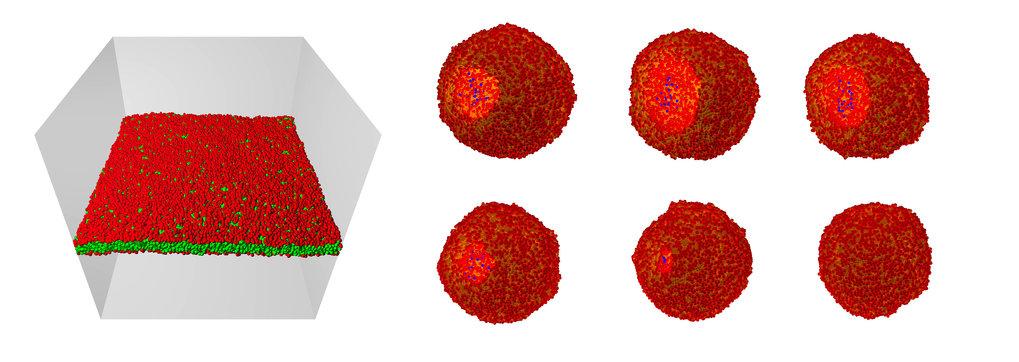 (Links) Orientiertes Membransegment, das aus etwa 8000 Lipidmolekülen besteht und von etwa 3 Millionen Wassermolekülen umgeben ist (das Wasser ist nic