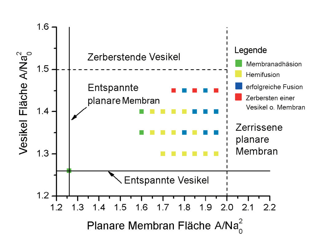 Morphologiediagramm für eine Vesikel im Kontakt mit einer planaren Membran als Funktion der anfänglichen Membranfläche pro Molekül A/Na02 für die plan