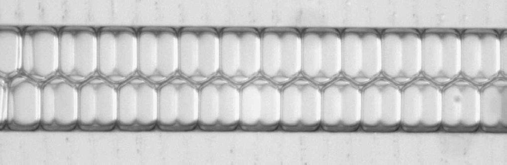 Eine Emulsion aus lauter gleich großen Wassertröpfchen in sehr wenig Öl, eingebracht in einen mikrofluidischen Kanal (Breite 200 Mikrometer). Das Öl b