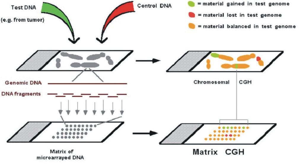 <b>Erkennung genomischer Imbalancen durch CGH auf Metaphase-chromosomen ('chromosomal CGH') oder dichten DNS-Sondenrastern ('Matrix CGH')</b>.
