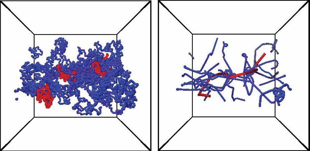 Ergebnis der selbstkonsistenten Analyse des primitiven Pfades. Links ist die Original-Konformation und rechts die resultierenden primitiven Pfade der