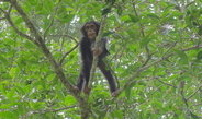 Wild chimpanzees plan their breakfast time, type and location