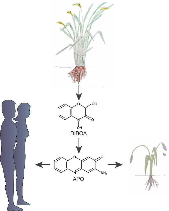 pflanzen verteidigen ihr revier mit giftstoffen | max-planck, Garten und Bauen