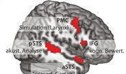 Scientists discover neural communication pathways for prosody.