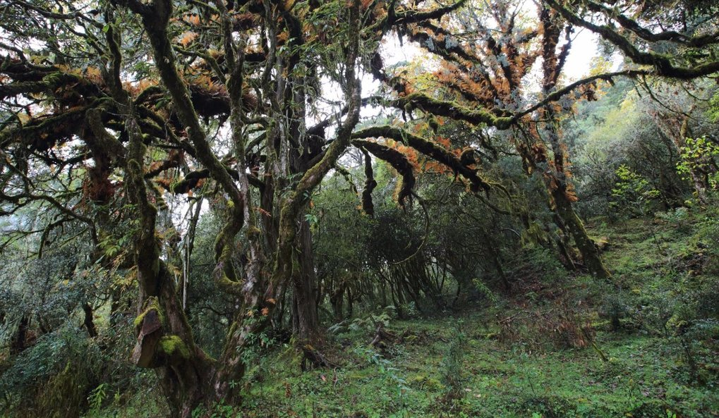Bären, wilde Elefanten, Tiger - in den Wäldern Bhutans leben noch viele Tierarten, die andernorts schon ausgestorben sind. Das Verhalten die