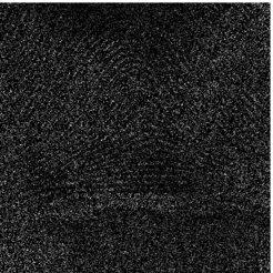 <strong>Abb. 2:</strong> Beschädigtes Bild (80% der Pixel sind entfernt).