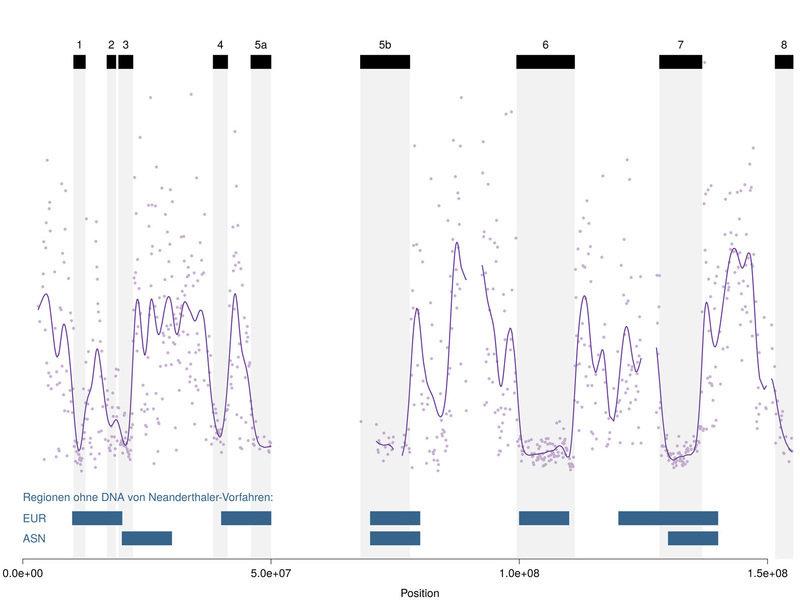 <strong>Abb. 2</strong>: Muster eines <em>incomplete lineage sorting</em> anhand der Ausrichtung des X-Chromosoms von Mensch, Schimpanse und Gorilla.